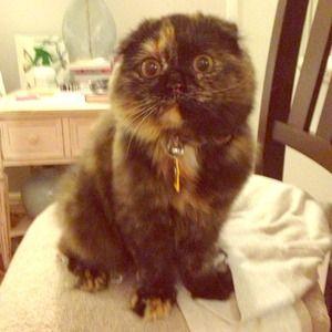 Other - My little fluff monster, Nola!