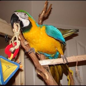 Accessories - My bird-baby, August Rayne aka Gussie!