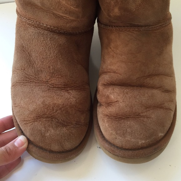 chesnut short uggs