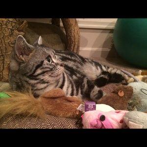 Other - Cat photos!