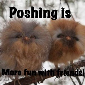 Poshing is so much more fun with friends!