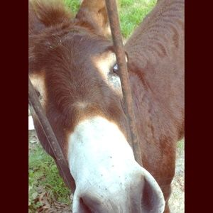 Other - I'm Katie! Please take a look & bring carrots🐴