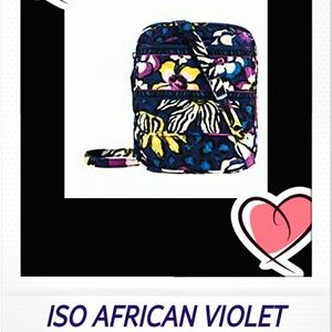 ISO AFRICAN VIOLET MINI HIPSTER