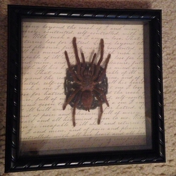 Other Framed In 9x9 Frame Tarantula Spider Poshmark