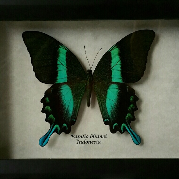 Other | Handmade Real Exotic Framed Butterfly | Poshmark
