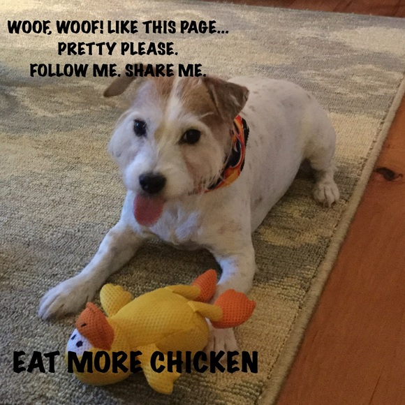 Other - HELP ME 🐾🐾LIKE, FOLLOW,SHARE! LETS DO IT AGAIN🐾