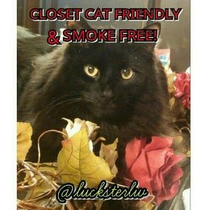 Other - 🌸THIS CLOSET🌸IS CAT FRIENDLY & SMOKE FREE!
