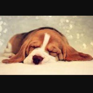 Accessories - Sleeping 💤💤💤😴😴