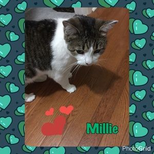 Other - #Millie 💕💕😽😽