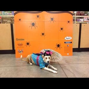 Accessories - 🎃Adorable Dog Geisha Halloween Costume🎃