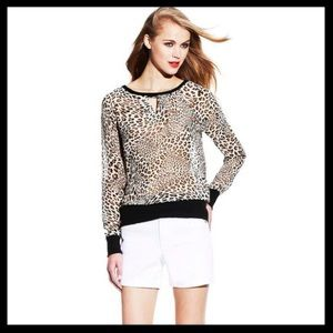 HOLD 🚫 two by vince camuto // leopard banded top