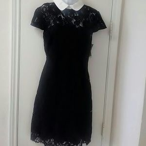 Lauren Ralph Lauren lace contrast collar Dress
