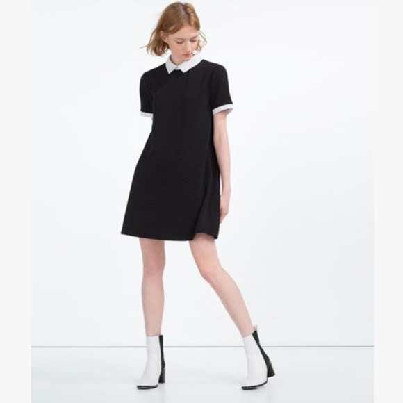 Zara Dresses Sale Black Dress With White Peter Pan Collar Poshmark