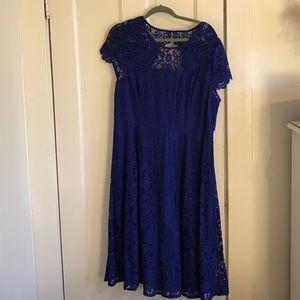 Dorothy Perkins Dresses & Skirts - NWT Royal Blue lace dress