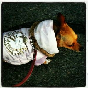 *Fave Doggie Couture & Store! Modeled by my pup!*