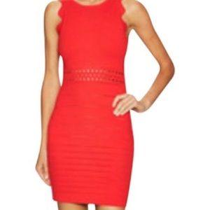 Endless Rose Dresses & Skirts - Endless Rose Scalloped Knit Bodycon Dress