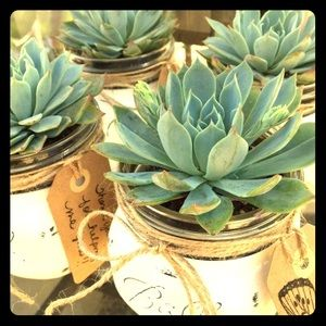 Jack Mason Brand Other - 50 Succulent Cuttings Live, for your next project.