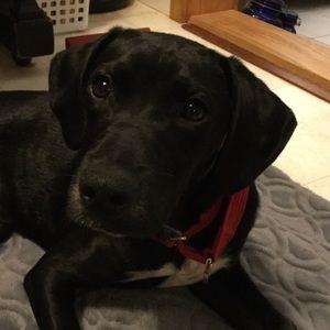 Meet Bentley 🐾