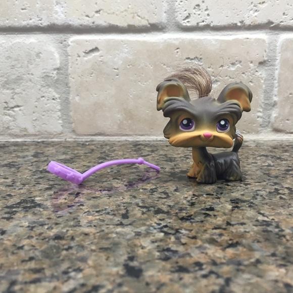 Hasbro Other Littlest Pet Shop Lps Gray Yorkie Whair Leash Euc
