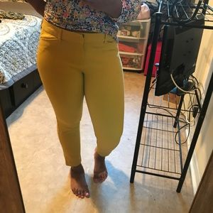 Mustard Pixie Pants