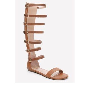 bebe Gladiator Sandals