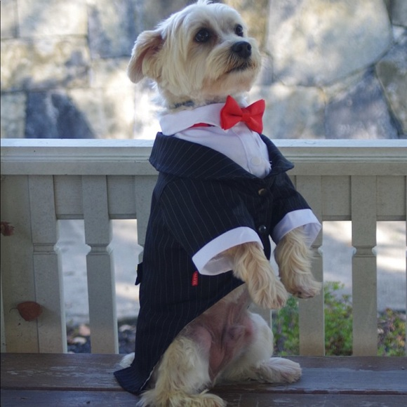 Dog tuxedo black and white pinstripe small suit & Other | Dog Tuxedo Black And White Pinstripe Small Suit | Poshmark