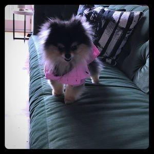 Ralph Lauren Dog Dress