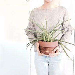🆕Listing! NWOT Zara ruffle sleeve sweater