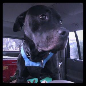 Help us transport rescues like Tyson!