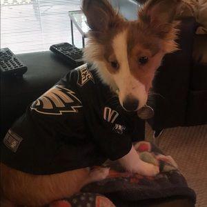 sale retailer 99119 d02c3 Philadelphia Eagles dog jersey 🐶