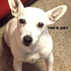 our pet friendly home includes Joey