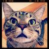 meowmeowpopcat