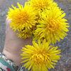 flowergold