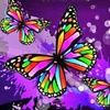butterflyshines