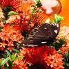 mariposa1749