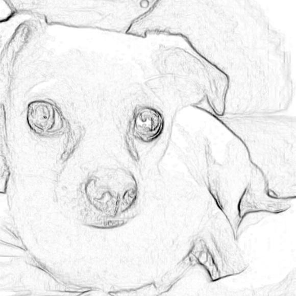 rainisdog