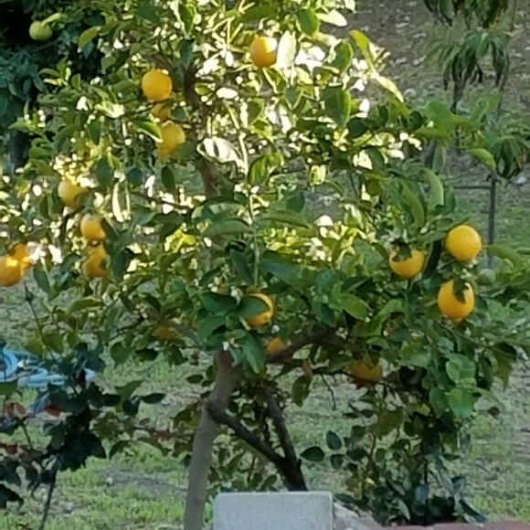 Los Angeles Amethyst Gem Fairy Orange Citrus Fruit Crate Label Art Print