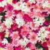 pinkclozet