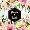 shasta_birch